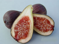 Fig Brunoro Black