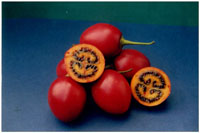 Tamarillo Ted's Red